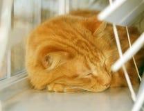 Het Dutje van de kat Royalty-vrije Stock Afbeeldingen