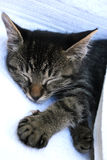 Het dutje van de kat Stock Foto's