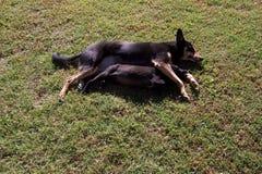 Het dutjetijd van Dogshet lepelen Royalty-vrije Stock Foto