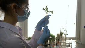 Het ecologische experiment, laboratoriumspecialist onderzoekt specimen van genetisch gewijzigde installaties in reageerbuis stock videobeelden