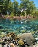 Het ecosysteem van de mangrove Stock Afbeeldingen