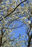Het is een bloeiende tuin Stock Fotografie