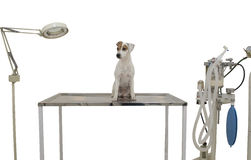 Het is een leuke kleine hond Royalty-vrije Stock Afbeelding