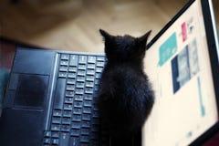 Het een weinig zwarte katje zit op laptop stock foto