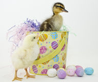 Het Eendje en Ckick van Pasen Royalty-vrije Stock Afbeelding