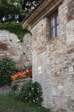 Het eenvoudige tuinieren in Italië, geraniums en kappertjes Royalty-vrije Stock Foto's