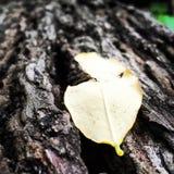 Het eenzame blad in het hout Royalty-vrije Stock Foto's
