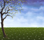 Het eenzame boom groeien op de de zomerweide Stock Afbeeldingen