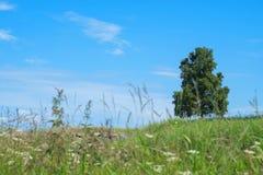 Het eenzame boom groeien op een gebied stock fotografie
