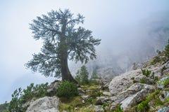 Het eenzame boom groeien op een hoge klip Royalty-vrije Stock Afbeeldingen