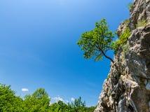 Het eenzame boom hangen van rotsen in de bergen royalty-vrije stock fotografie