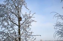 Het eenzame die vogelhuis op een boom met rijp wordt behandeld wacht op de lente en ingezetenen, op een ijzige de winterdag tegen royalty-vrije stock afbeelding