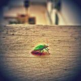 Het eenzame insect Stock Foto