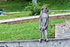 Het eenzame leven van apen Royalty-vrije Stock Afbeeldingen