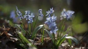 Het eerste bloeien bloeit in een de lente wild bos Vers gras en bloemen in de lente Bloeiende bloemen in wilde aard stock video
