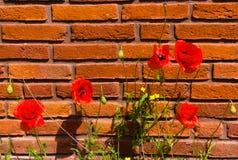 Het eerste bloeien van bloemen in de lente stock afbeeldingen