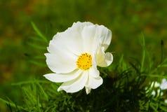 Het eerste bloeien van bloemen in de zomer royalty-vrije stock afbeelding