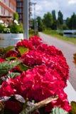 Het eerste bloeien van bloemen in de zomer stock fotografie