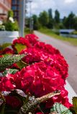 Het eerste bloeien van bloemen in de zomer stock afbeeldingen