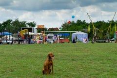 Het eerste festival van jagers in het dorp Perekhrest Stock Foto's