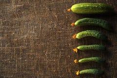 Het eerste gewas van komkommers op zijn huisperceel worden geoogst in de vroege zomer die stock foto's