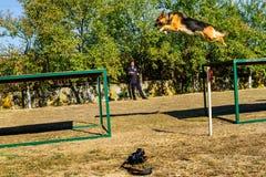 Het eerste kampioenschap van de Nationale Politie van de Oekraïne met globale hondmanagers Stock Foto