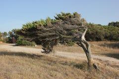 Het effect van de wind Royalty-vrije Stock Afbeelding