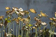 Het effect van het herbicide Royalty-vrije Stock Afbeelding