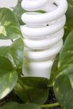 Het efficiënte licht van de energie in installatie Stock Foto's