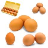 Het ei isoleerde de vastgestelde ruwe proteïne van het ontbijt verse voedsel Stock Fotografie