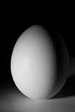 Het ei van de kip Stock Foto