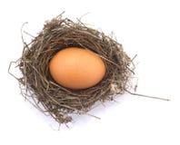 Het ei van de kip in een nest Stock Foto's