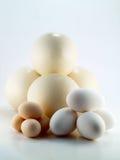 Het ei van de struisvogel, van de gans en van de kip Royalty-vrije Stock Afbeelding