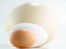 Het ei van de struisvogel, van de gans en van de kip Stock Foto