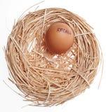 Het Ei van het Concept van het rappel in Nest Stock Foto's