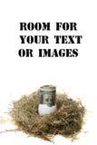 Het Ei van het nest Stock Foto