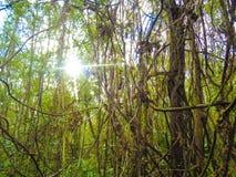 Het eiken beeld van de het seizoenfoto van het bomenhout royalty-vrije stock fotografie