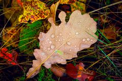 Het eiken blad van de herfst op de bestrating Royalty-vrije Stock Foto