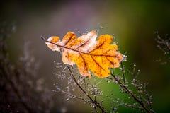 Het eiken blad van de herfst op de bestrating Royalty-vrije Stock Afbeeldingen