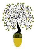 Het eiken boom groeien van eikel Stock Fotografie