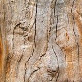 Het eiken hout in longitudinale sectie, mooie textuur vulde met barsten en knopen, achtergrond royalty-vrije stock foto