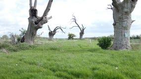 Het eiken oude van angst verstijfde bos die van Boomdryades van de dag genieten die 2000 jaar 9 vieren stock afbeeldingen