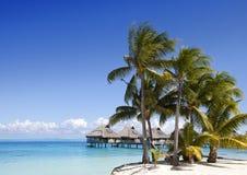 Het eiland met palmen in de oceaan stock afbeeldingen