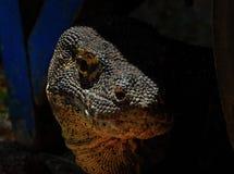 Van de draakeilanden van Komodo het nationale park Royalty-vrije Stock Afbeeldingen