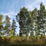 Het Eiland Natuurreservaat van Toronto stock afbeelding