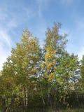 Het Eiland Natuurreservaat van Toronto stock afbeeldingen