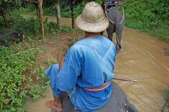 Het eiland Thailand van Phuket van de olifantsrit Royalty-vrije Stock Foto