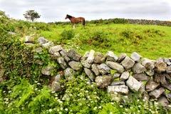 Het Eiland van Aran, Ierland stock foto's