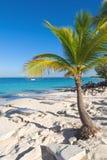 Het eiland van Catalina - Playa DE La isla Catalina - Caraïbische tropische overzees Stock Afbeeldingen