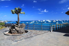 Het Eiland van Cruz van de kerstman, de Galapagos stock afbeelding